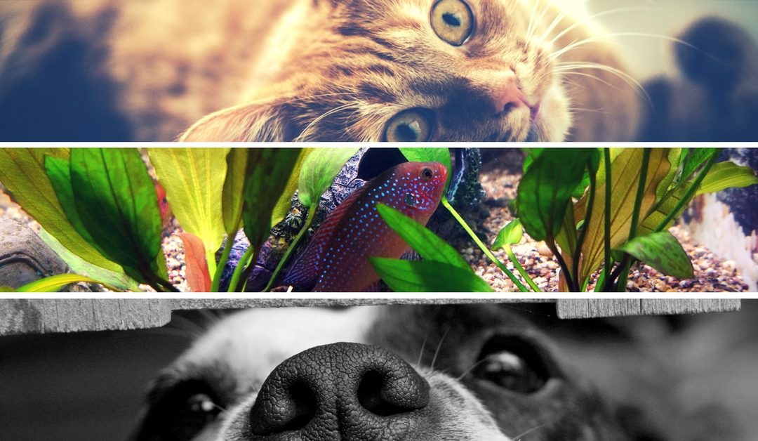 What countries will welcome your furry friends?