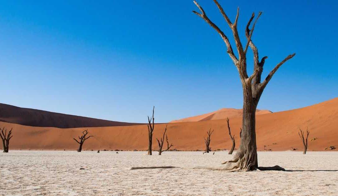 8 days in the Namib desert