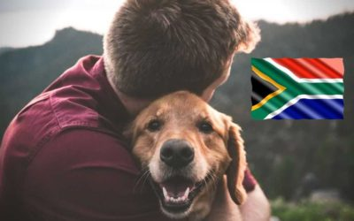 Immigrating To New Zealand With Pets? Here's Your Pet Relocation Guide