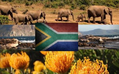 What Do South Africans Living Abroad Miss Most About Home?
