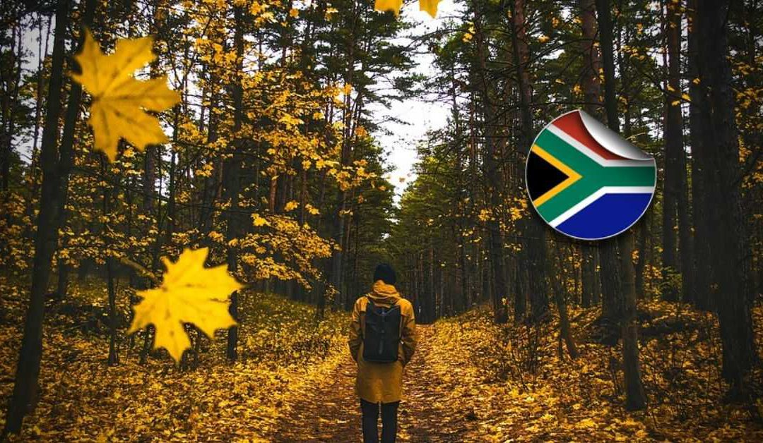What to Do About Your South African Inheritances When You're Living Overseas