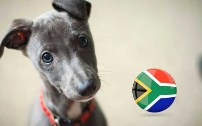 Jock of the Bushveld & Puppy Day