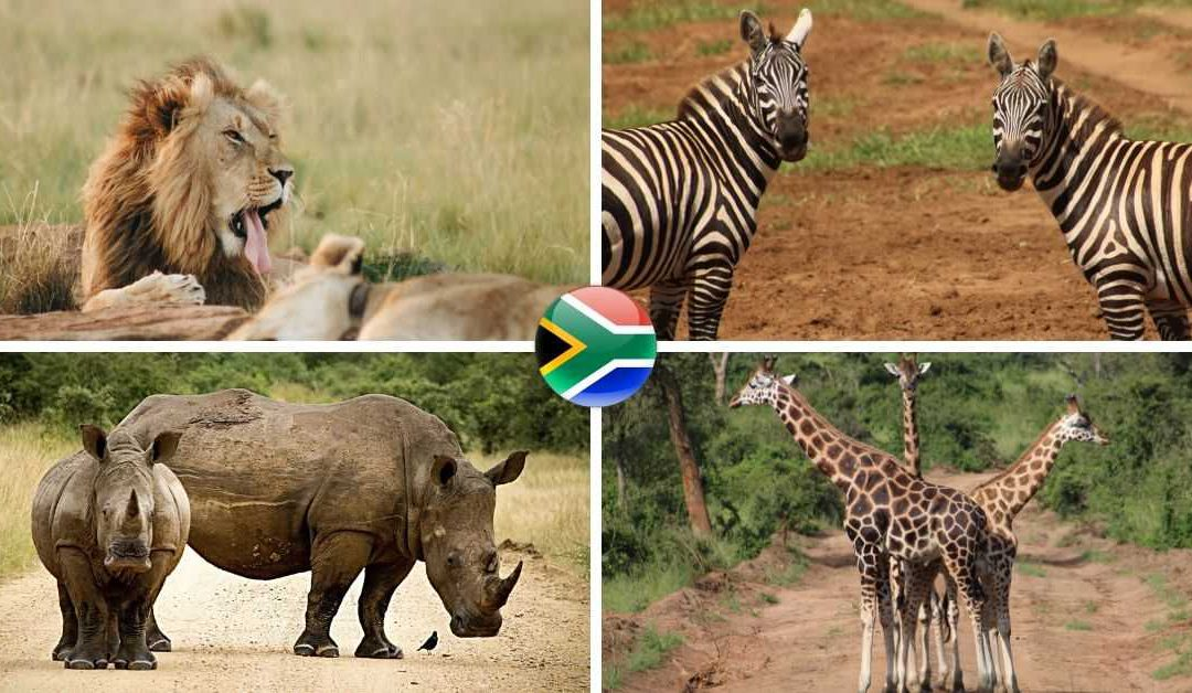 Cool South African Animal Facts