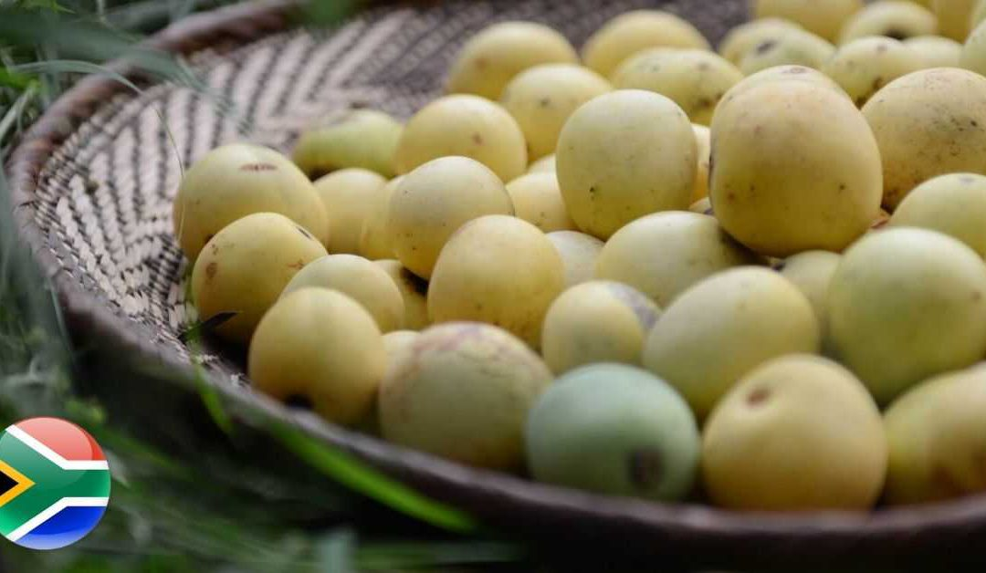 Marula Oil: Africa's Magic Oil