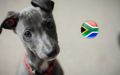 The Expat's Guide: Pet Immigration to the UK