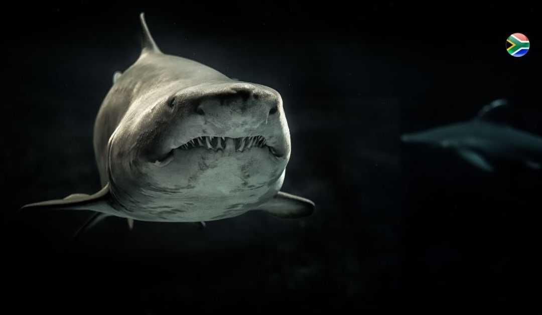 Awesome animals: The great white shark